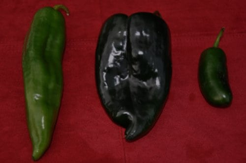 How to Roast Chiles at Home-Southwest Cooking Basics